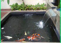 Cara Memelihara Ikan Koi 🐠🐠 Agar Tidak Mati