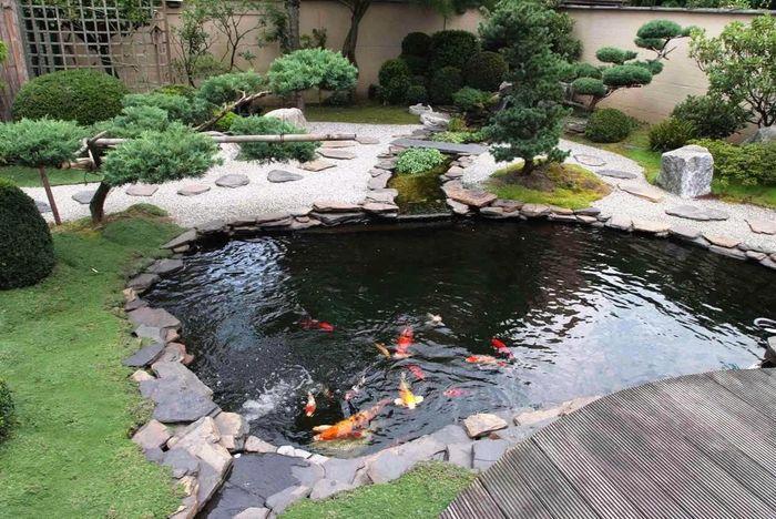 Mengatur Kedalaman Kolam Ikan Koi Jual Ikan Koi