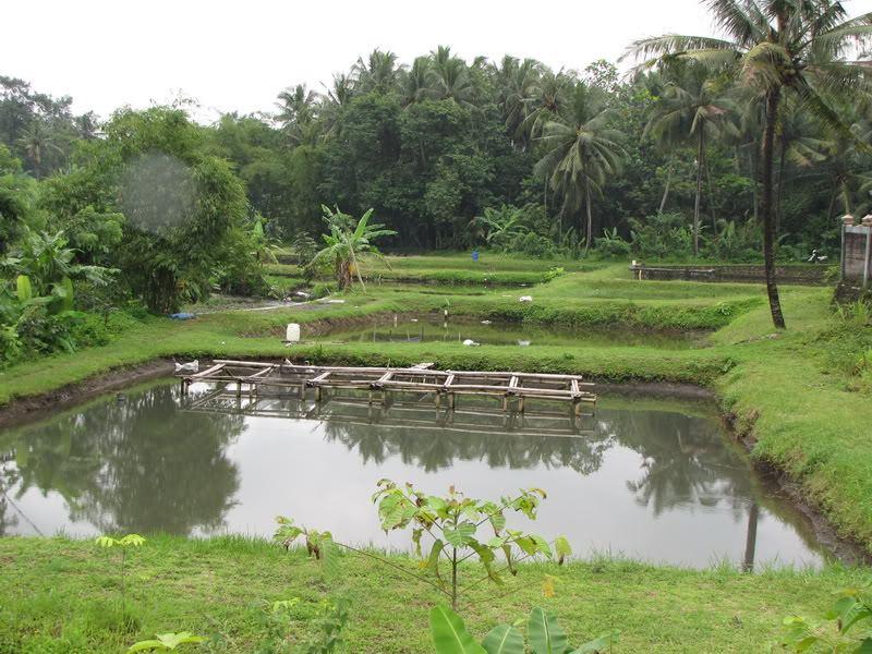 kolam tanah 3