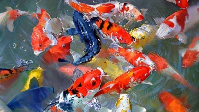 Jual Ikan Koi Ambon