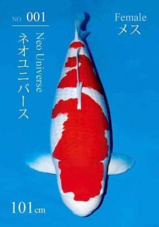 Ikan Koi Termahal Di dunia