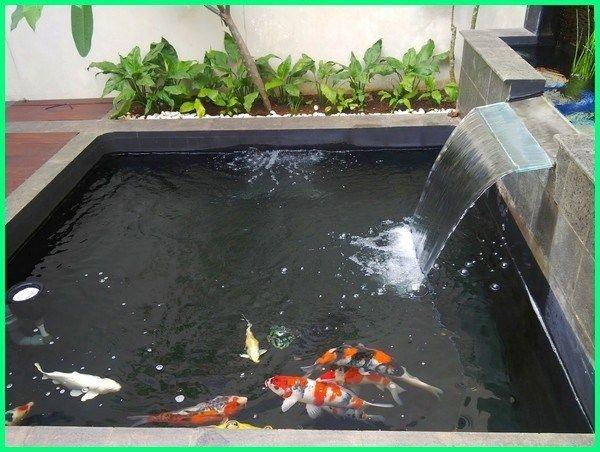 Kolam Minimalis Ikan Koi